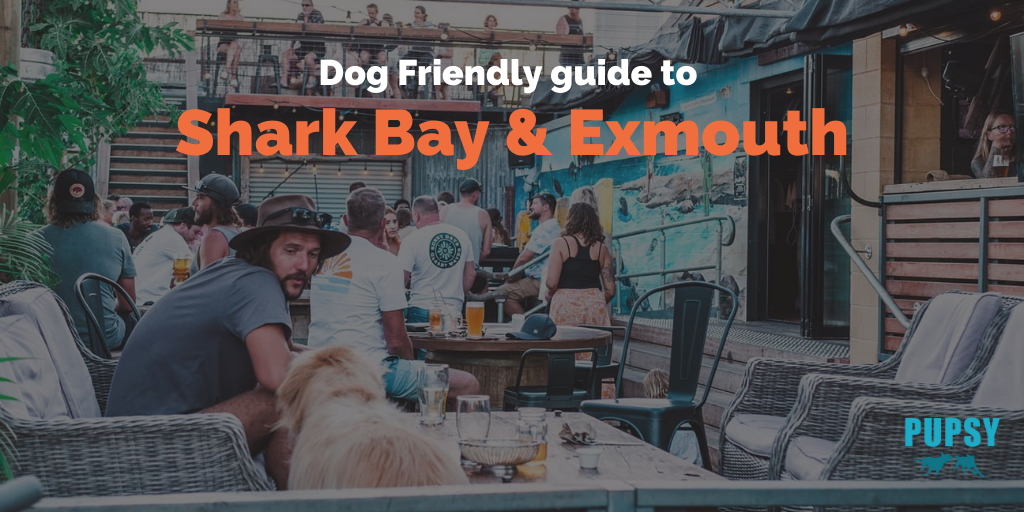 dog-friendly-Shark Bay-and-Exmouth