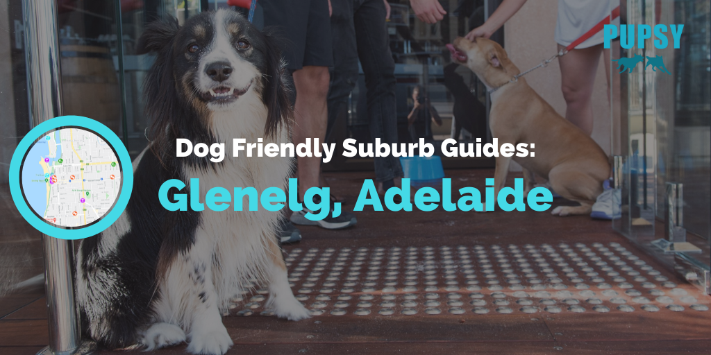 dog-friendly-glenelg-adelaide