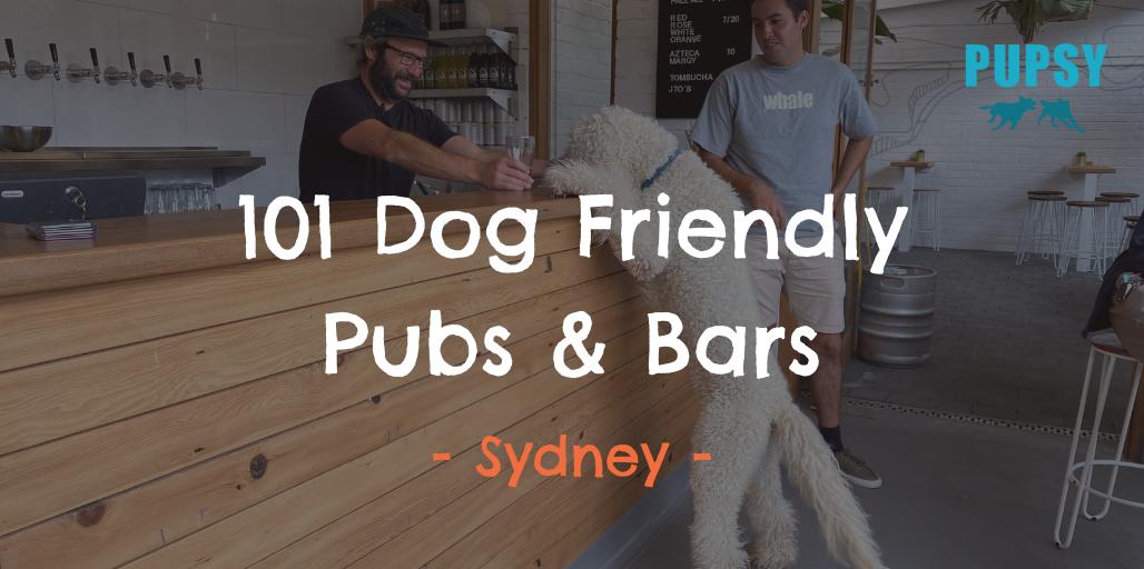 101 Dog-Friendly-Pubs-Bars-Sydney