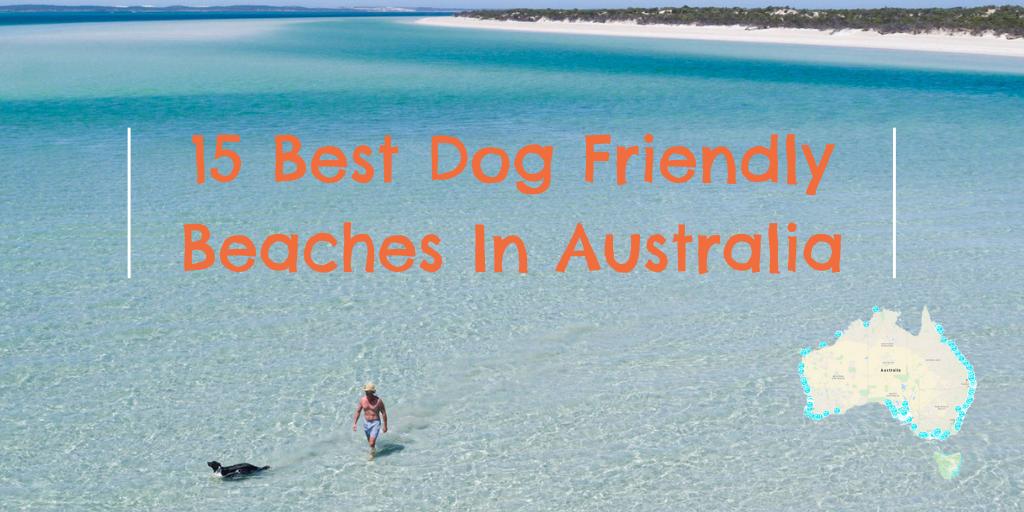 15 Best Dog Friendly Beaches