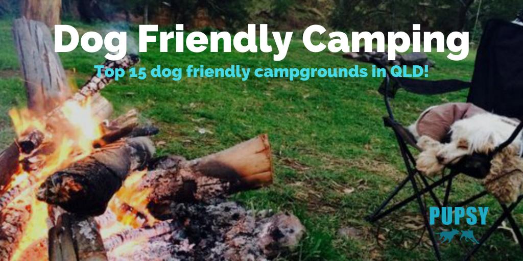 dog-friendly-camping-qld