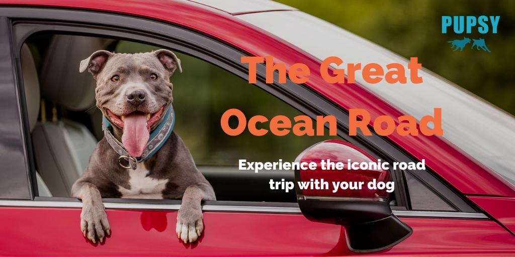 dog-friendly-great-ocean-road