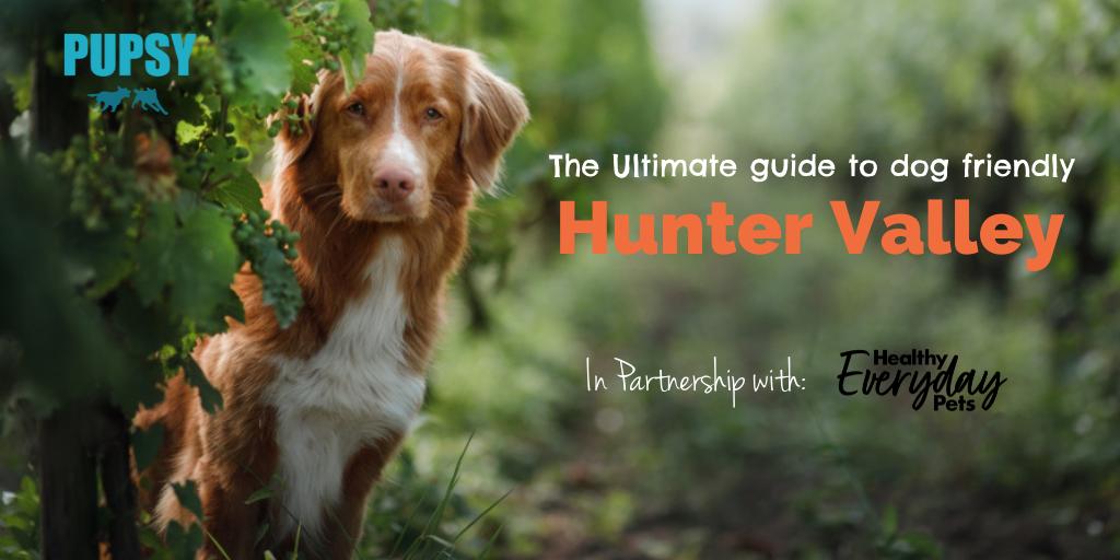 dog-friendly-hunter-valley-HEP-new