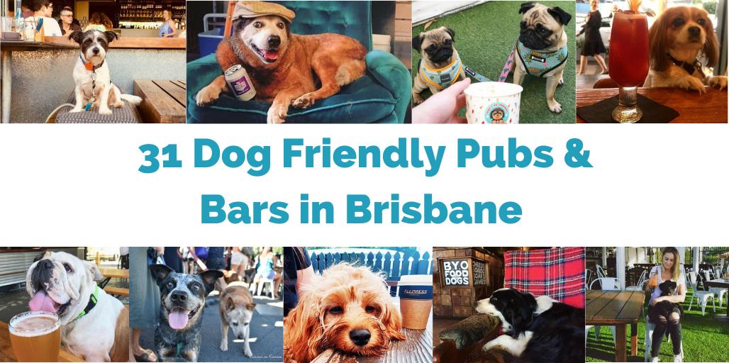 dog-friendly-pubs-brisbane