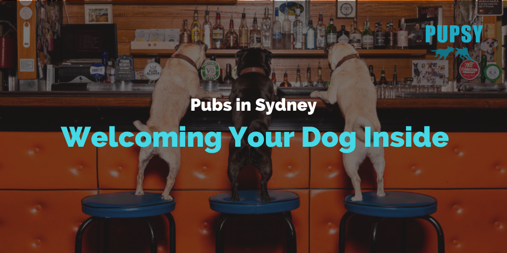 dog-friendly-pubs-in-sydney-welcoming-your-dog-inside