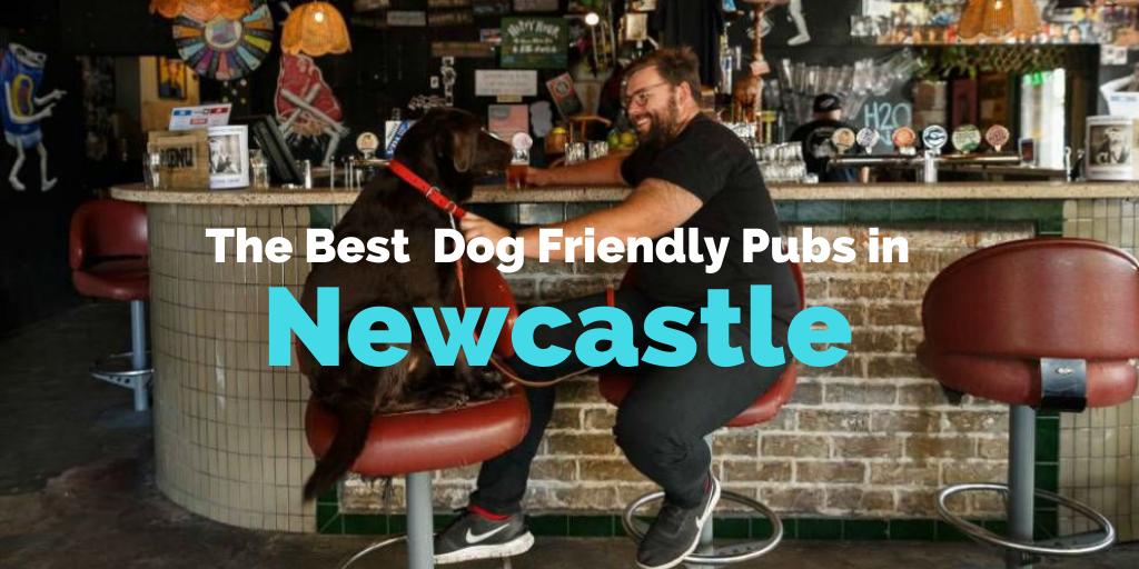 dog-friendly-pubs-newcastle