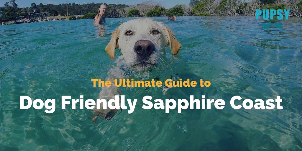 dog-friendly-sapphire-coast