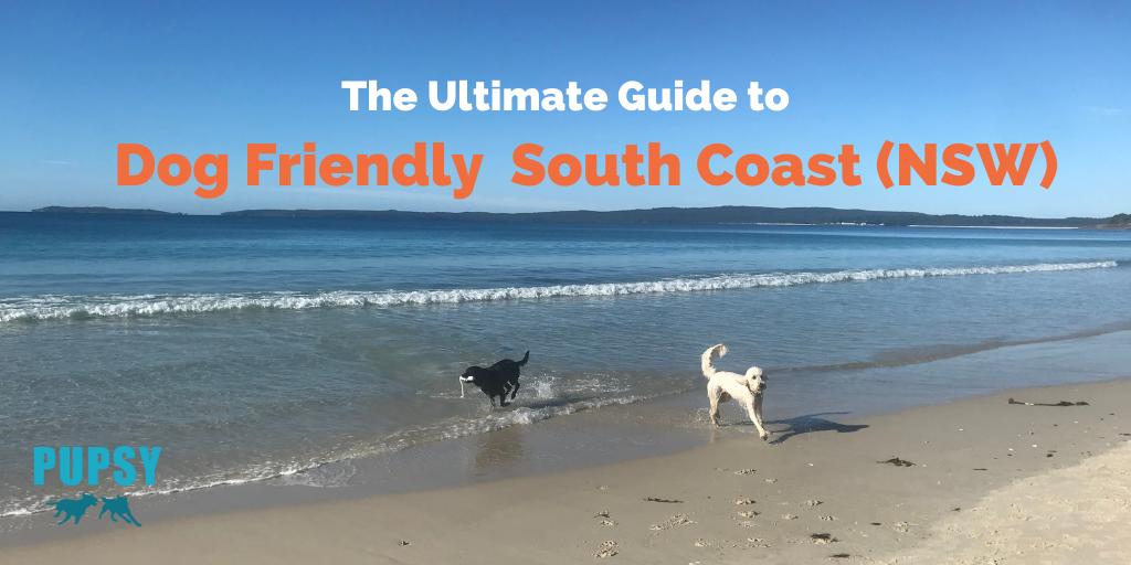 dog-friendly-south-coast-new