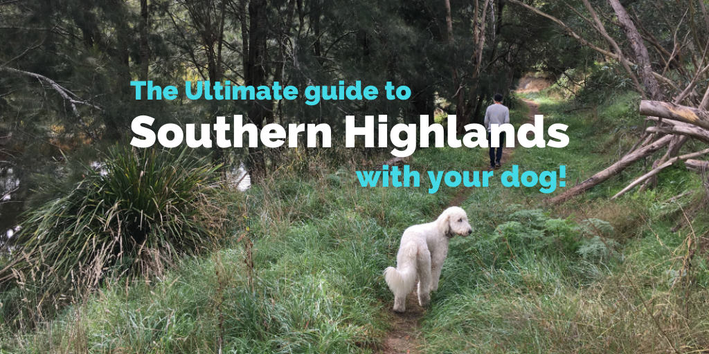 dog-friendly-southern-highlands-new