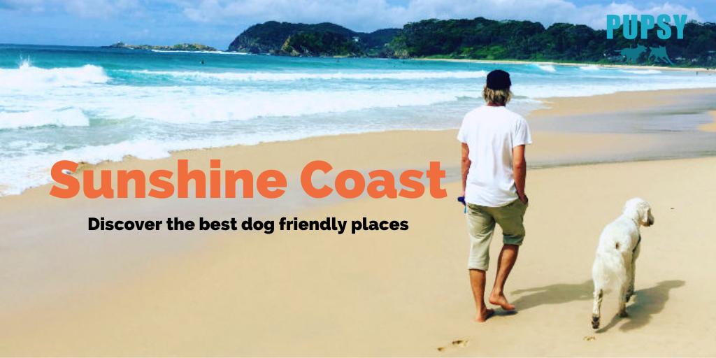 dog-friendly-sunshine-coast