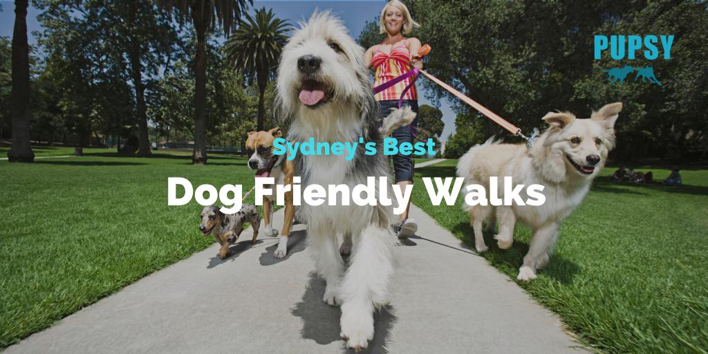 dog-friendly-walks-sydney