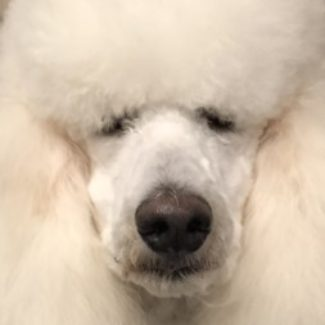 Profile picture of Dogs @ Play