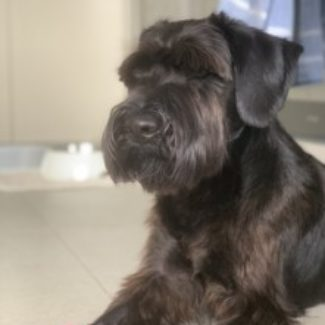 Profile picture of Alfie